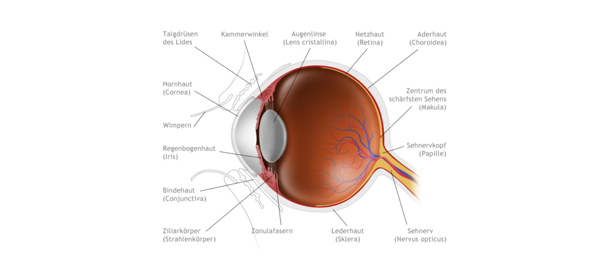 Strebel Optik das Auge